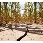 Unpredictable Weather Puts Food Supply at Risk