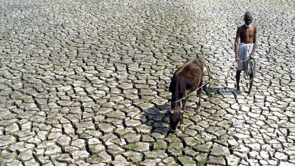 An Indian farmer walks with his hungry cow through a parched paddy field in Agartala, India, 2005.    REUTERS/Jayanta Dey