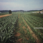 30 Year Old Trial Finds Organic Farming Outperforms Conventional Agriculture
