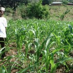 Learning event: Climate-smart agriculture in the field – planning, implementation and upscaling