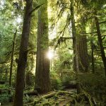 Carbon Talk: Can BC's forests help to reduce emissions?