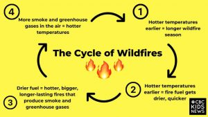 Flow diagram showing the Cycle of Wildfires, black text on a bright yellow background. Step One: Hotter temperatures earlier equals a longer wildfire season. Step two: Hotter temperatures earlier equals fire fuel getting drier quicker. Step three equals hotter, bigger, and longer-laster fires that produce smoke and greenhouse gases. Step Four: more smoke and greenhouse gases in the air equals hotter temperatures. Process repeats, going back to step one.